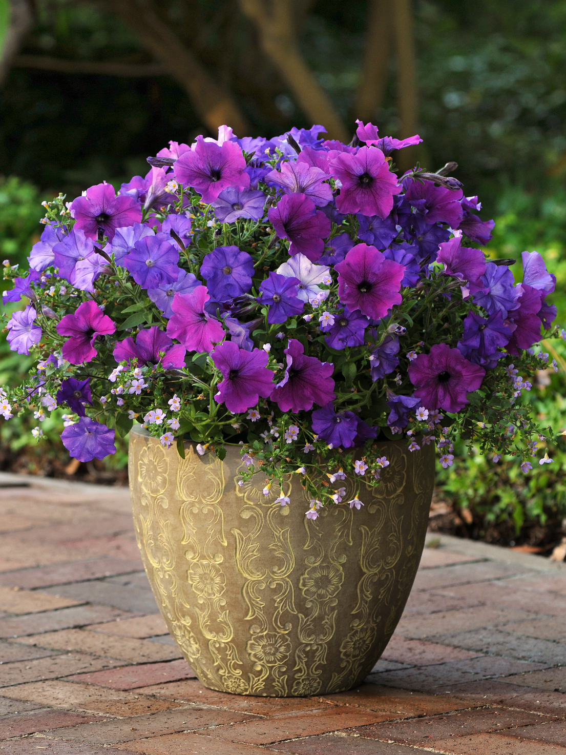 Fuseable Petunia Healing Waters