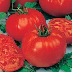 Tomato - Big Beef F1 Hybrid