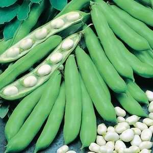 Beans Broad Coles Prolific