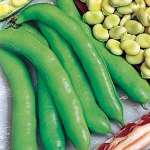 Beans - Broad Imperial Green (Bulk)