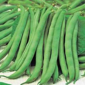 Beans Dwarf French Top Crop