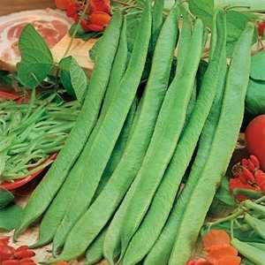 Beans - Scarlet Runner Tenderline