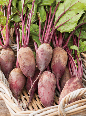Beetroot All Seasons F1 Hybrid
