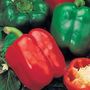 Capsicum Sweet Pepper Double Up F1 Hybrid