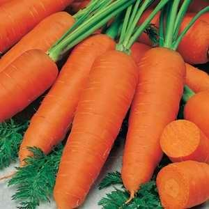 Carrot Topweight