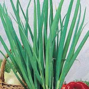 Chives - Garlic