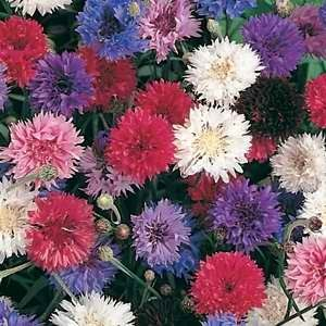 Cornflower Polka Dot Mix