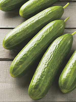 Cucumber Socrates F1 Hybrid : Egmont Seed Company Ltd, Online seed ...