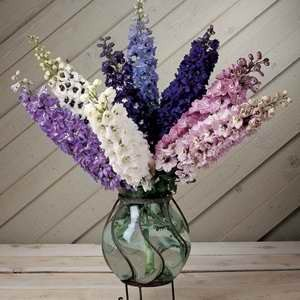 Delphinium Dwarf Fountains Mix