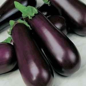 Eggplant Early Prolific F1 Hyb