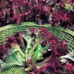 Lettuce Multileaf Red
