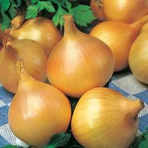Onion - Pukekohe Long Keeper (Bulk)