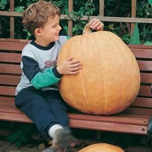 Pumpkin - Atlantic Giant F1 Hybrid (Novelty Item)
