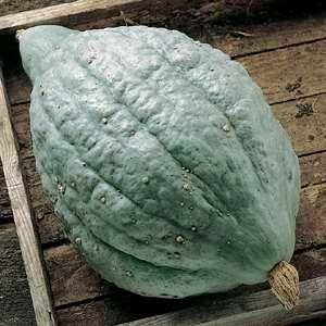 Pumpkin Squash Large Blue Hubbard