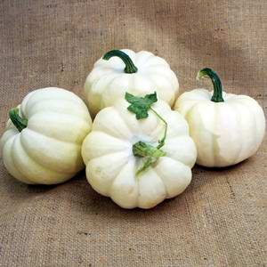 Pumpkin (Squash) - White Cloud F1 Hybrid