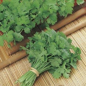 Seed Mat Coriander Santo [Leaf Production] (8cm)
