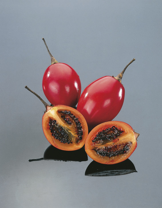 Tamarillo Tree Tomato