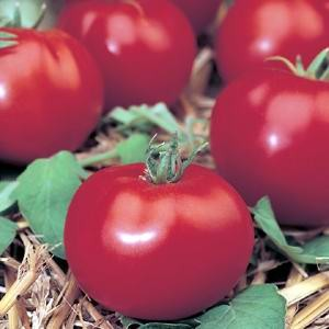Tomato Heirloom Potentate