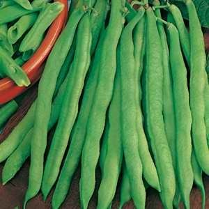 Beans Dwarf French Greencrop