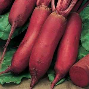 Beetroot Red Torpedo F1 Hybrid