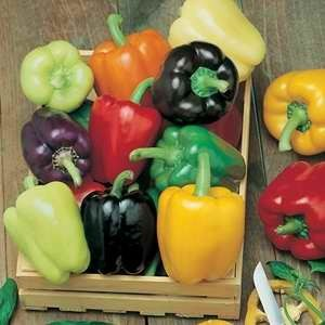 Capsicum Sweet Pepper Mixed Colours