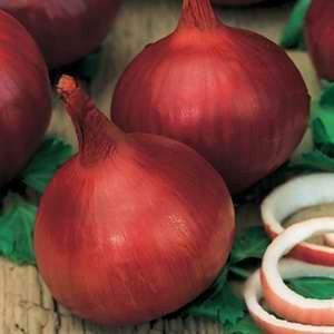 Onion Californian Red