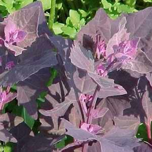 Spinach Orach