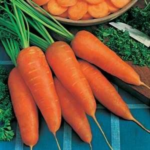 Carrot Chantenay Red Core