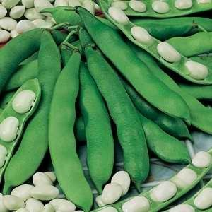 Beans Broad Exhibition Long Pod - 500g Bulk