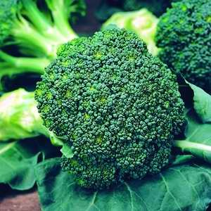Broccoli Mighty Mini F1 Hybrid
