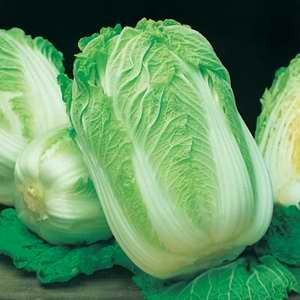 Cabbage - Chinese Wong Bok