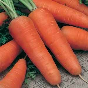 Carrot All Seasons - 25g Bulk