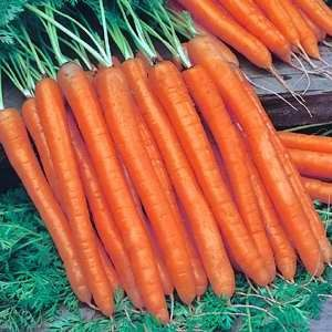 Carrot Ladies Fingers