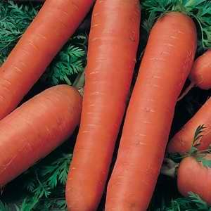 Carrot Manchester Table - 25g Bulk