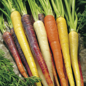 Carrot Rainbow Mixed