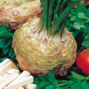 Celeriac Giant Prague