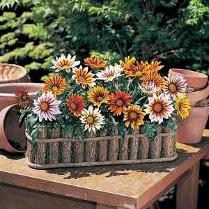 Gazania Tiger F1 Hybrid Mix