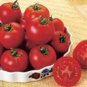 Tomato Heirloom Russian Red