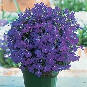Flowers Egmont Seed Company Ltd Online Seed Sales
