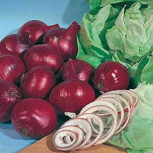 Onion F1 Hybrid Red Rambo
