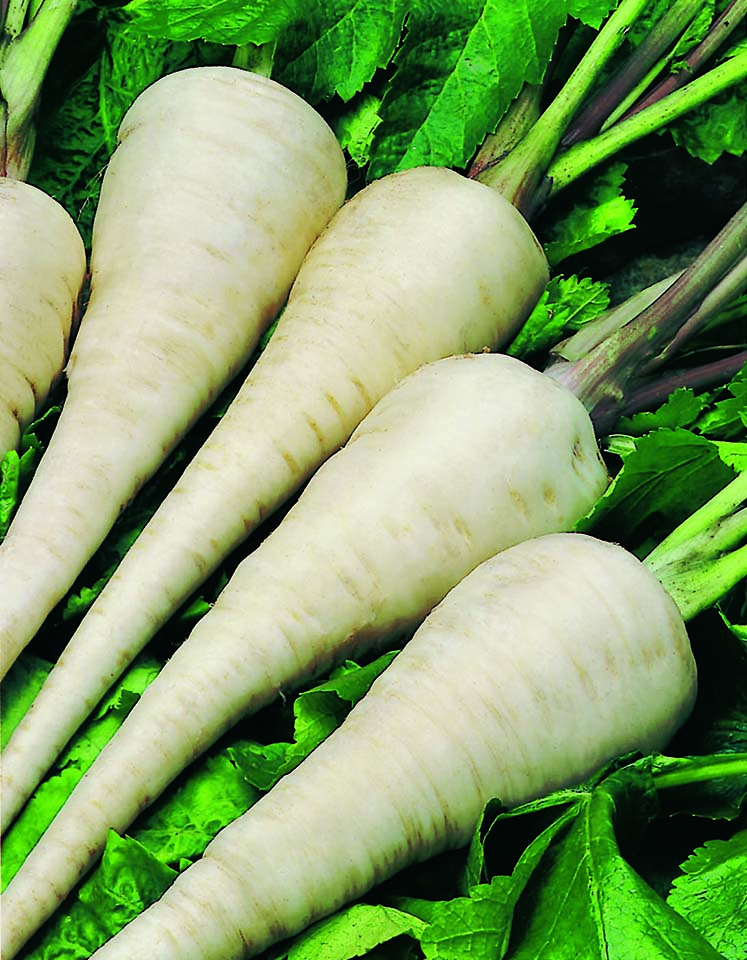 Parsnip VIP (NZ Grown)