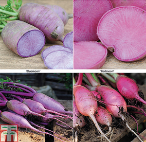 Radish Bluemoon & Redmoon Mix F1 Hybrid