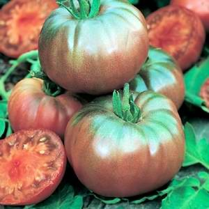 Tomato Heirloom Black Krim