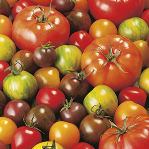 Tomato Heirloom Mix